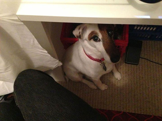Layla under the sewing table